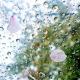 pétales de cerisiers