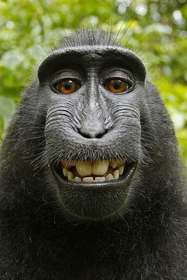 monkey3[1]