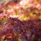 couleurs de l'automne - Cédric Riveau