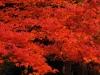 Japon - Korakuen